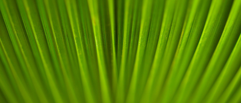 Bliskie ujęcie liścia
