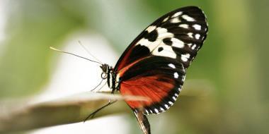 Motyl siedzi na gałęzi