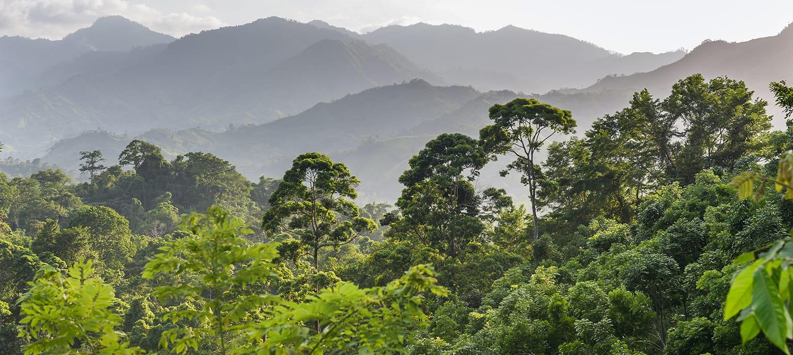 Las deszczowy w Hondurasie