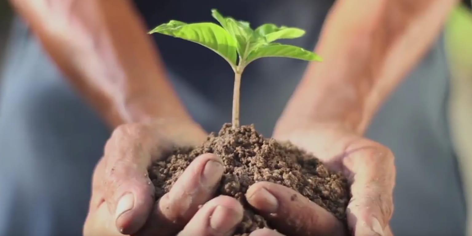 Osoba trzyba w ręku sadzonkę z ziemią
